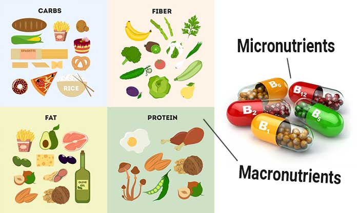 Image result for micronutrients